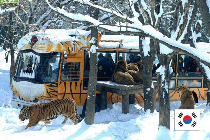 ทัวร์เกาหลี Hi Korea Winter Ski (พ.ย.-ธ.ค.61)