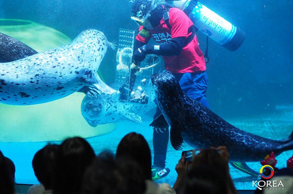 Coex Aquarium พิพิธภัณฑ์สัตว์น้ำ กลางกรุงโซล