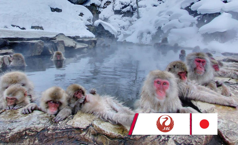 ทัวร์ญี่ปุ่น Wonderful Snow Monkey in Nagano (ม.ค.-มี.ค.62)