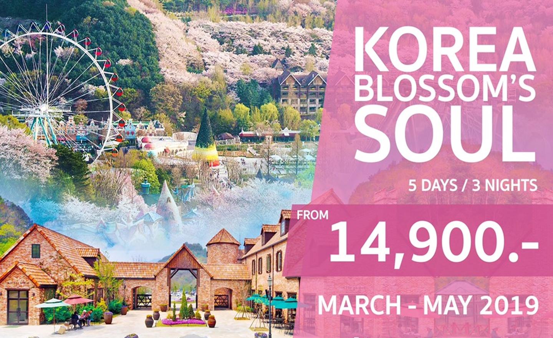 ทัวร์เกาหลี Korea Blossom's Soul (มี.ค.-พ.ค.62)