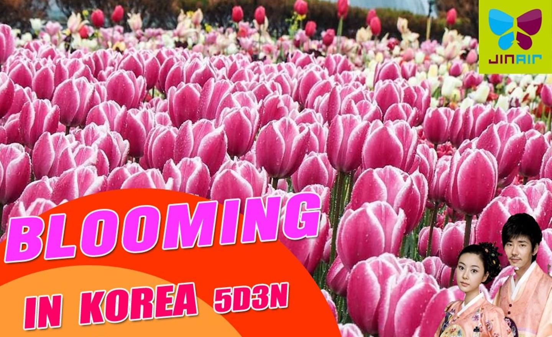 ทัวร์เกาหลี Brooming In Korea (มี.ค.-เม.ย.62)