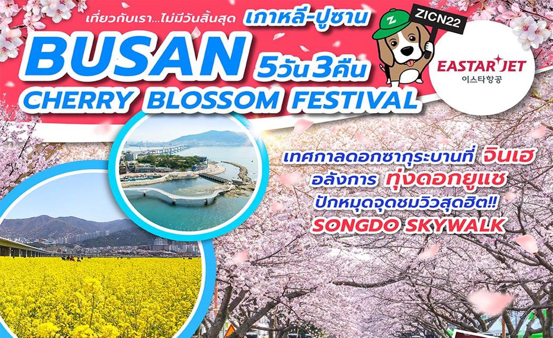 ทัวร์เกาหลี Busan Cherry Blossom festival (เม.ย.62)