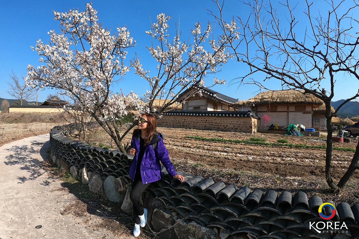หมู่บ้านประวัติศาสตร์ ฮาฮเว
