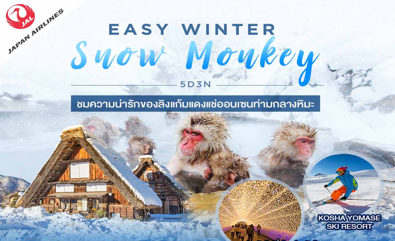 ทัวร์ญี่ปุ่น Easy Winter Snow Monkey 5D3N (ก.พ.-มี.ค.63)