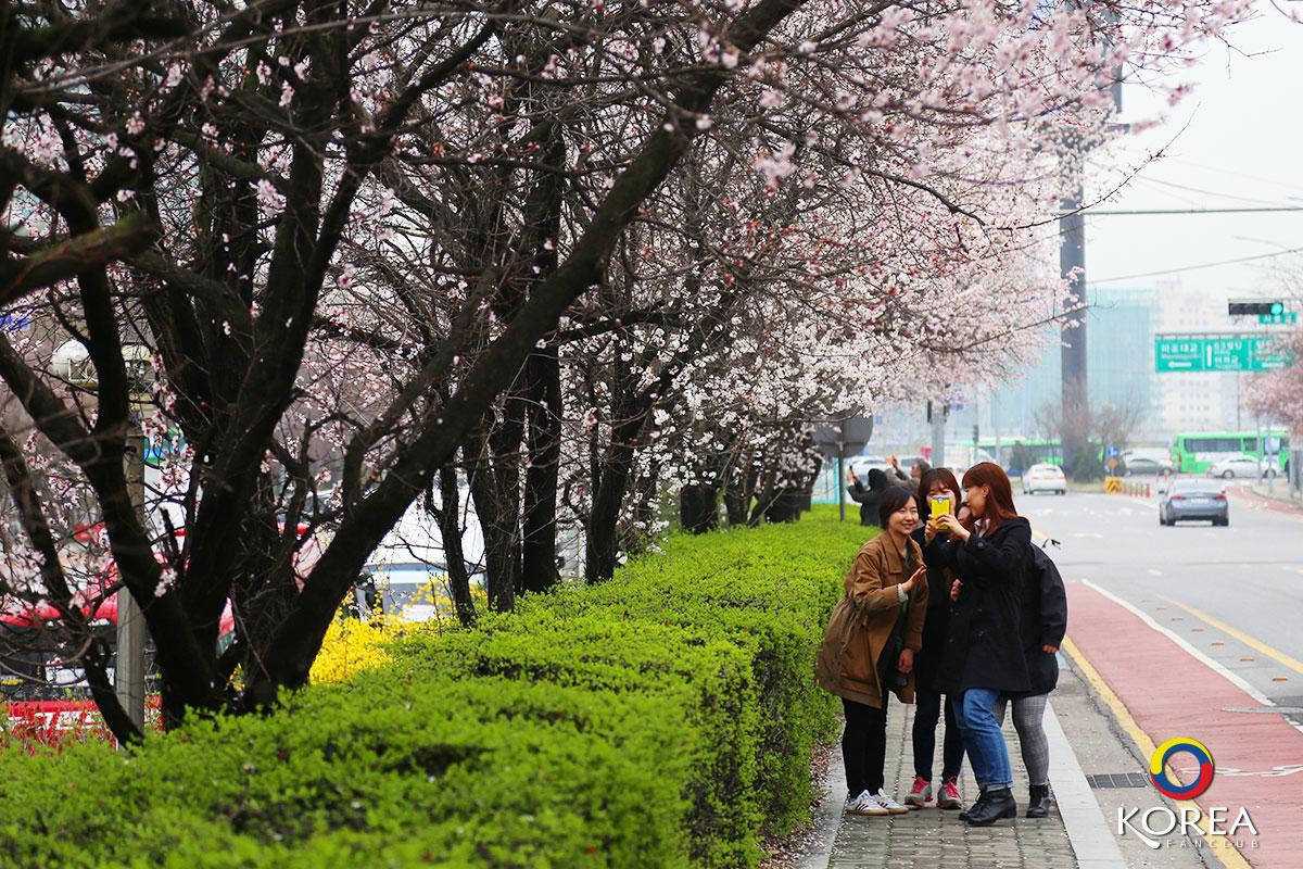 อุทยานฮันคัง ยออีโด : Yeouido Hangang Park