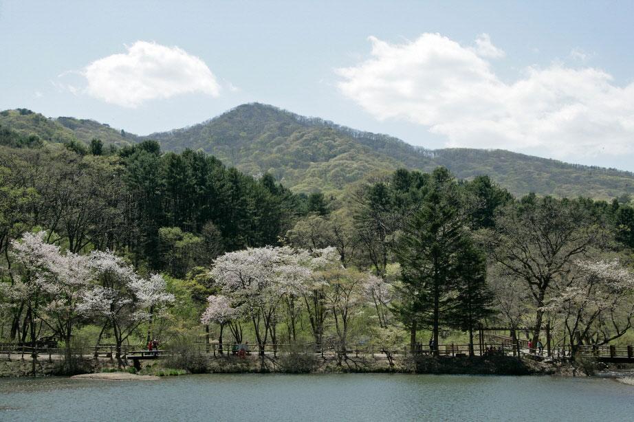 สวนรุกขชาติ เกาหลี : Korea National Arboretum