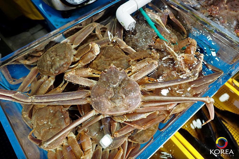 ตลาดกิจัง : Gijang Market
